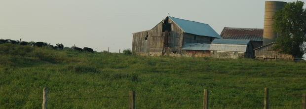 farm-with-cows-in-field
