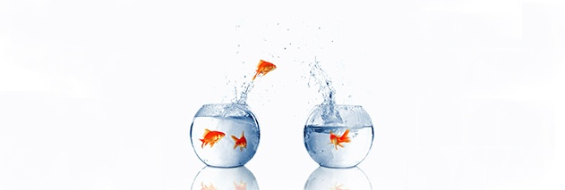 goldfish-jumping-from-one-bowl-to-another