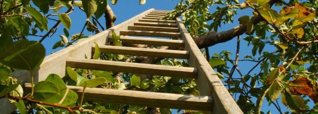 ladder-in-tree-with-blue-sky